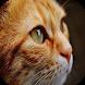 Best Cat wallpapers by Drjob Studio