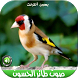 اصوات طائر الحسون بدون نتMP3 by nanadev