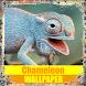 Chameleon Reptile Wallpaper by Tirtayasa Wallpaper