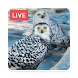 Owl Live Wallpaper HD