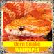Corn Snake Reptile Wallpaper by Tirtayasa Wallpaper