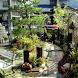 Modern Home Garden Design by belbo