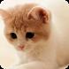 Cute Kitty Theme wallpaper by BEST APP Developer