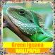 Green Iguana Reptile Wallpaper by Tirtayasa Wallpaper
