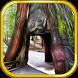 Escape Game Deserted Island by Escape Game Studio