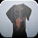 Doberman Pinscher Game by Chris Codes