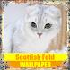 Scottish Fold Cat Wallpaper by Tirtayasa Wallpaper