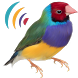 Oiseaux Appels Sons Gratuit by geekboom