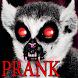 Prank Lemur From Hell by Avva
