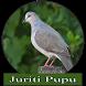 Femea de Juriti Pupu by axellayasmine7