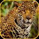 Leopard Glance Wallpapers 3D. by Daniel Simpson