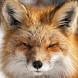 arctic fox wallpaper by Dark cool wallpaper llc