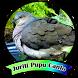 JURITI PUPU CANTO Offline by axellayasmine7