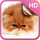 Fluffy Kitty Live Wallpaper HD by Dream World HD Live Wallpapers