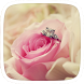 Pink Rose Love Theme by Heartful Theme