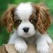 Cute puppy live wallpaper by iim mobile