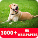 Dog Live Wallpapers HD by HD Live Wallpaper & Prank App