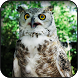 Owl Wallpapers by HAnna