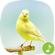 Appp.io - Canary Bird Sounds by Appp.io