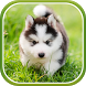 Cute Puppies Live Wallpaper by Live Wallpapers 3D