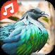 Chants d'oiseaux by Ap-ga