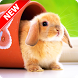 Cute Animal Wallpapers by Pinza