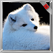 Arctic Fox Wallpaper by WallpapersInc
