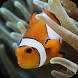 Ocean Fish Aquarium by mapewpo