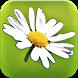 Blumy - Linguaggio dei fiori by Diego Masiello