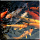 Koi Video Live Wallpaper by Jacal Video Live Wallpapers