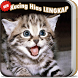 Kucing Hias Lucu imut LENGKAP by ataqoh