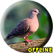 Suara Burung Tekukur Pikat by KingKustur Dev