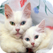 Turkish Van Cats Wallpapers by Laland Apps