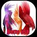 Betta fish by UbiHard