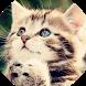 Kittens Aren't Forever by Stan Ivanov