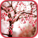 Cherry blossom Live Wallpaper by Creativity Development