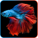 Betta Fish Live Wallpaper by AnuTo inc.