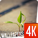 Plants Wallpapers 4k by Ultra Wallpapers