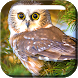 Lovely Owls Live Wallpaper by DreamyWakeboard