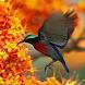 Birds of Singapore by Nature Society (Singapore)