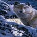 Wolf In Winter LWP by Daksh Apps