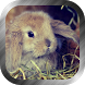 Bunny Wallpaper by FantasyWallpapers