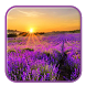 Lilac Lavender Live Wallpaper by HD Themes and Wallpaper
