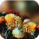 Autumn Flowers Live Wallpaper by Live Wallpapers 3D