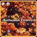 Autumn Leaves Keyboard by Keyboard Creative Park