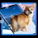 3D Rump Shaking Corgi Dog Theme&Live wallpaper by Dreamy Theme&Wallpaper