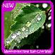 Waterdrops Real Rain Wallpaper by Murlock Apps