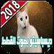 ديسباسيتو بصوت القطط 2018 by justice of libra
