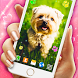 Cute Puppy Live Wallpaper by 3D HD Moving Live Wallpapers Magic Touch Clocks