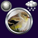 Birds Clock & Weather Widget by Compass Clock and Weather
